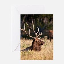 Unique Elk Greeting Card