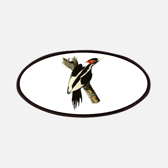 Ivory-Billed Woodpecker Patches