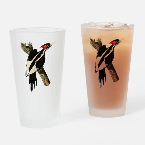 Ivory-Billed Woodpecker Drinking Glass