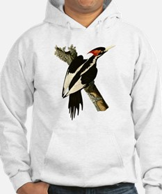 Ivory-Billed Woodpecker Hoodie