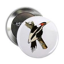 """Ivory-Billed Woodpecker 2.25"""" Button"""