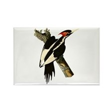 Ivory-Billed Woodpecker Rectangle Magnet