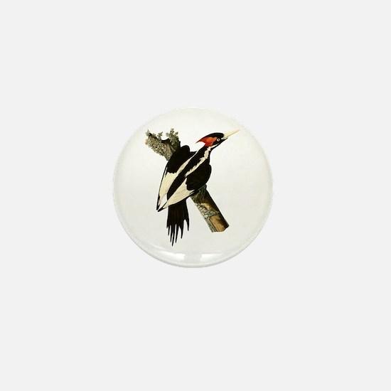 Ivory-Billed Woodpecker Mini Button