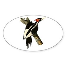 Ivory-Billed Woodpecker Decal