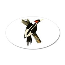 Ivory-Billed Woodpecker 22x14 Oval Wall Peel