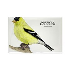 American Goldfinch Rectangle Magnet