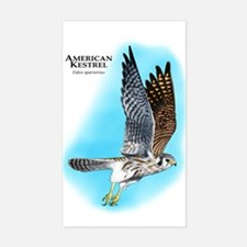 American Kestrel Decal
