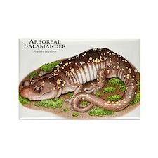 Arboreal Salamander Rectangle Magnet