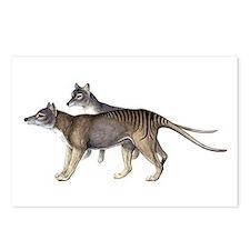 Thylacine Postcards (Package of 8)