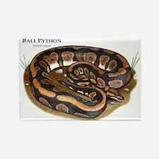 Ball Python Rectangle Magnet