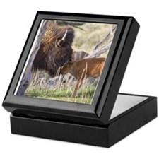 Funny Buffalo Keepsake Box