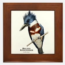 Belted Kingfisher Framed Tile