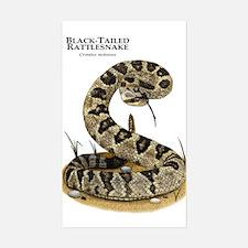 Black-Tailed Rattlesnake Sticker (Rectangle)