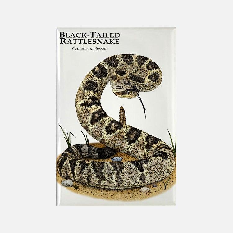 Black-Tailed Rattlesnake Rectangle Magnet