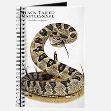 Black-Tailed Rattlesnake Journal