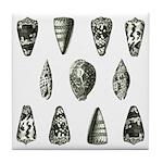 Seashells Tile Coaster