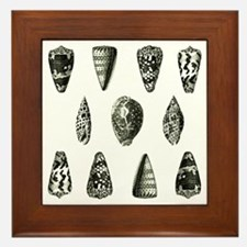 Seashells Framed Tile