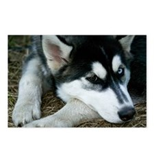 Siberian Husky Postcards (Package of 8)
