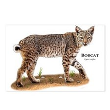 Bobcat Postcards (Package of 8)