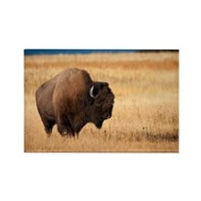 Cute Bison Rectangle Magnet