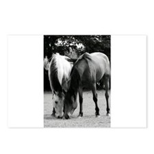 pONY lOVE bLACK AND WHITE Postcards (Package of 8)