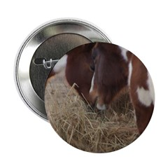 Pony Love 2 2.25