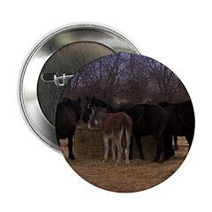 "Animal Farm 2.25"" Button (100 pack)"