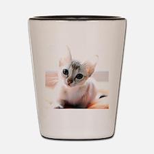 Cute Kitten Shot Glass