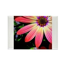 Bright Daisy Rectangle Magnet