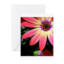 Bright Daisy Greeting Cards (Pk of 10)