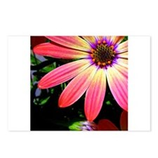 Bright Daisy Postcards (Package of 8)