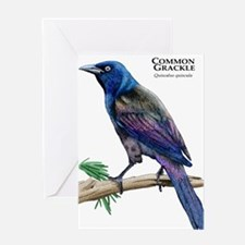 Common Grackle Greeting Card