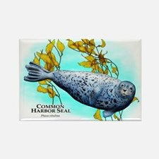 Common Harbor Seal Rectangle Magnet