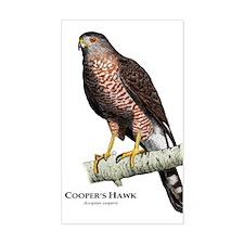 Cooper's Hawk Decal