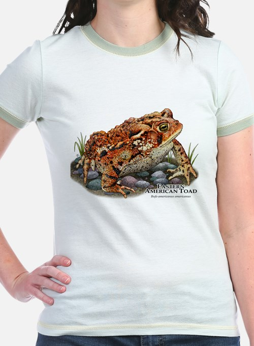 Eastern American Toad T