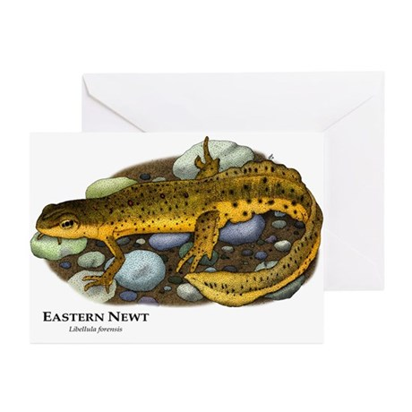 Eastern Newt Greeting Cards (Pk of 10)