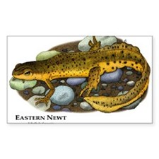 Eastern Newt Decal