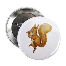 """Squirrel Nutkin 2.25"""" Button"""