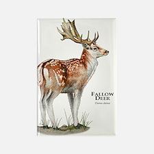 Fallow Deer Rectangle Magnet