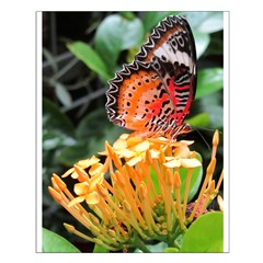 Butterfly on a Blossom Posters