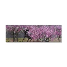 Spring Half Pass Dressage Car Magnet 10 x 3