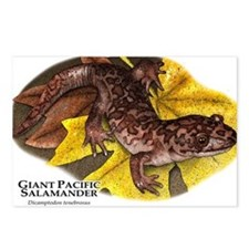 Giant Pacific Salamander Postcards (Package of 8)