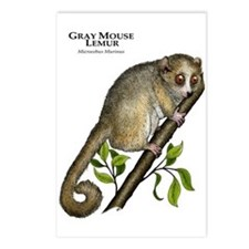 Gray Mouse Lemur Postcards (Package of 8)