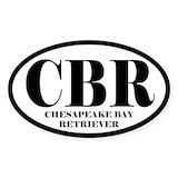 Chesapeake bay retriever Single