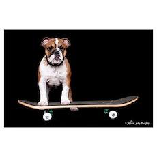 Skateboard Bulldog Poster