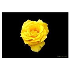 A Yellow Rose of Texas Framed Print