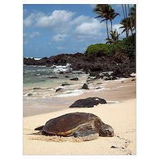Sea Turtle Beach Poster