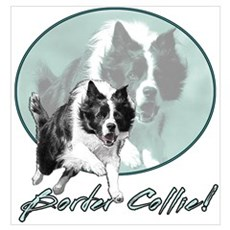 Border Collie Drive Poster