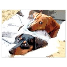 Naptime Dachshund Dogs Canvas Art