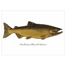 Chinook King Salmon Poster